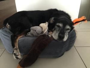 jackson-old-dog